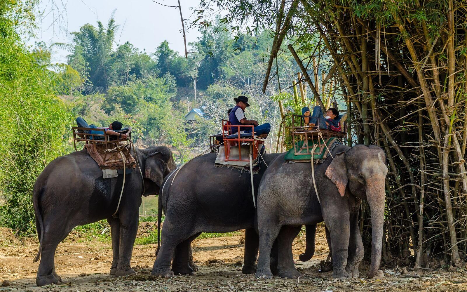 2D/1N Elephant Hills Jungle Safari - Elephant Experiences ...